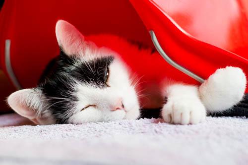 Symbolbild Katze als Haustier